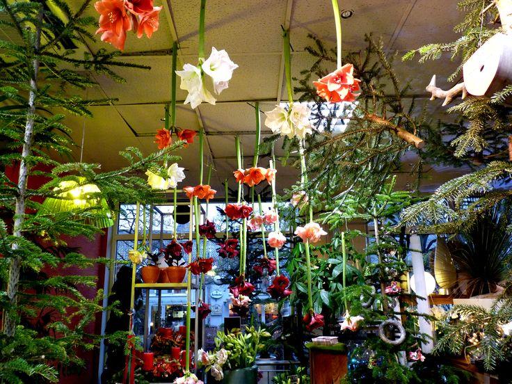 Märchenhafte Inszenierungen in den Blumengeschäften an Weihnachten