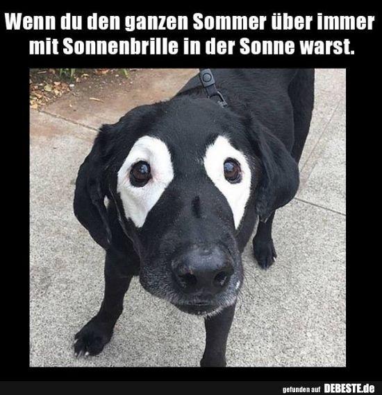 Wenn du den ganzen Sommer über immer mit Sonnenbrille in der Sonne warst. | Lustige Bilder, Sprüche, Witze, echt lustig