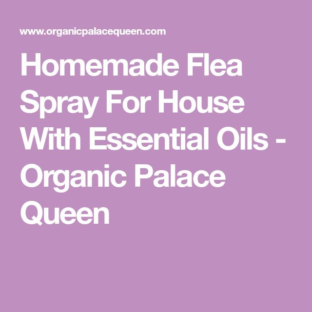Homemade Flea Spray For House With Essential Oils - Organic Palace Queen