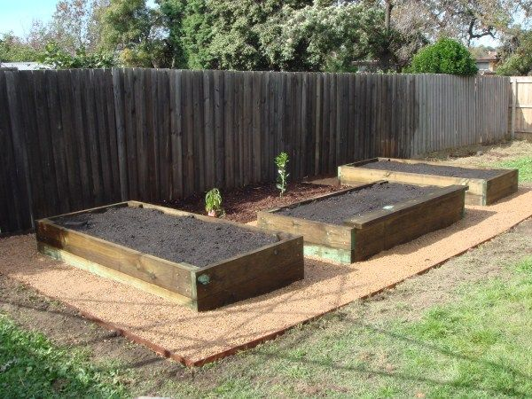 New raised veggie beds and fruit trees