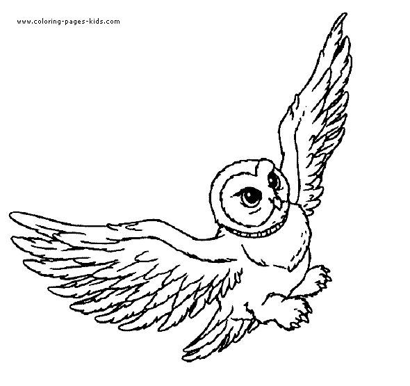 Hedwig from harry potter color page cartoon characters coloring pages color plate coloring sheetprintable coloring picture