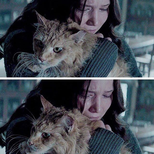 watching this part of the film with #Katniss and #Buttercup when she was telling him about #Prim broke my heart