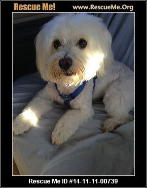 Mickey (male)  Maltese Mix    Health:Neutered, Vaccinations Current    Animal Location:  Woofs, Wiggles N Wags Rescue Maricopa County Scottsdale, AZ 85254 MAP IT!  Contact: 602-828-2425   Facebook:Email to FriendProblems/CorrectionsMark As Unavailable