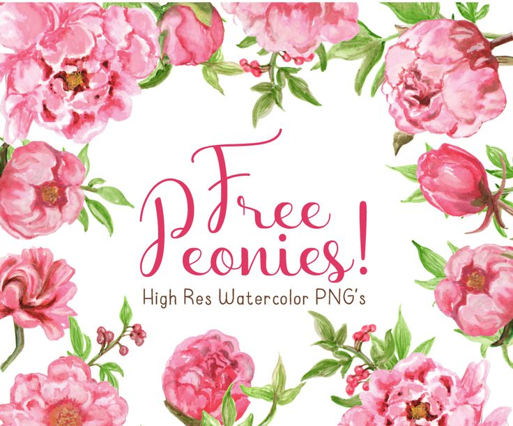 This Free Watercolor Peonies Clipart is the first collaboration between my talented friend Sally and I! Lot's more watercolor landing in my shop soon.