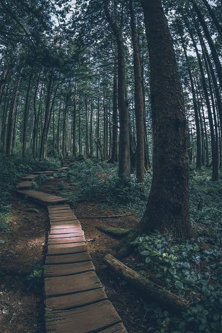 Olympic National Forest | ( by Nathan )