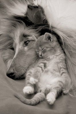 sweet contentmentSnuggles, Best Friends, Sweets, Dogs Cat, Pets, Friendship, Cuddling Buddy, Kittens, Animal