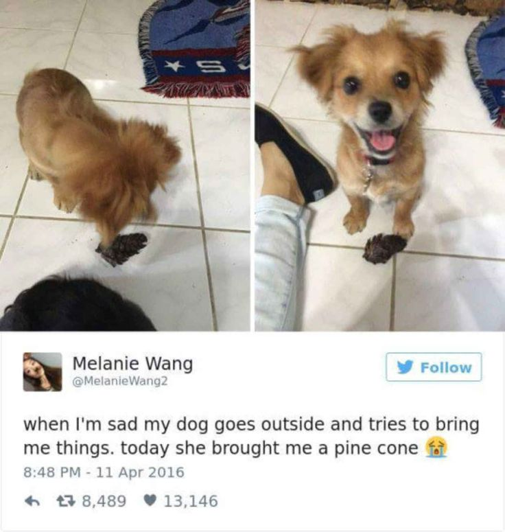 Best Pets Images On Pinterest - Some people tied their dogs up and left them to die during the flood