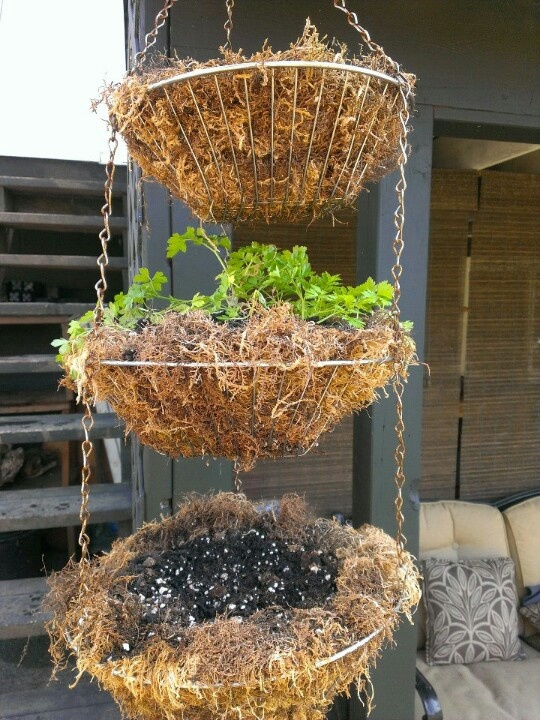 Great idea for growing herbs!