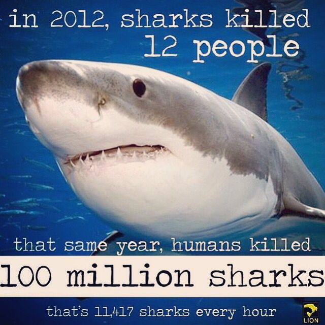 Today is world oceans day! Every year, as many as 100 million sharks die at the hands of humans. Many die in the ocean as their fins are cut off and taken away to be sold to foreign markets, where they fetch prices as high as $500 per pound. Sharks are especially vulnerable to population decreases due to their slow growth rate and low birth numbers, and overfishing and finning has left one-third of open ocean sharks at the brink of extinction. #WildlifeEarth