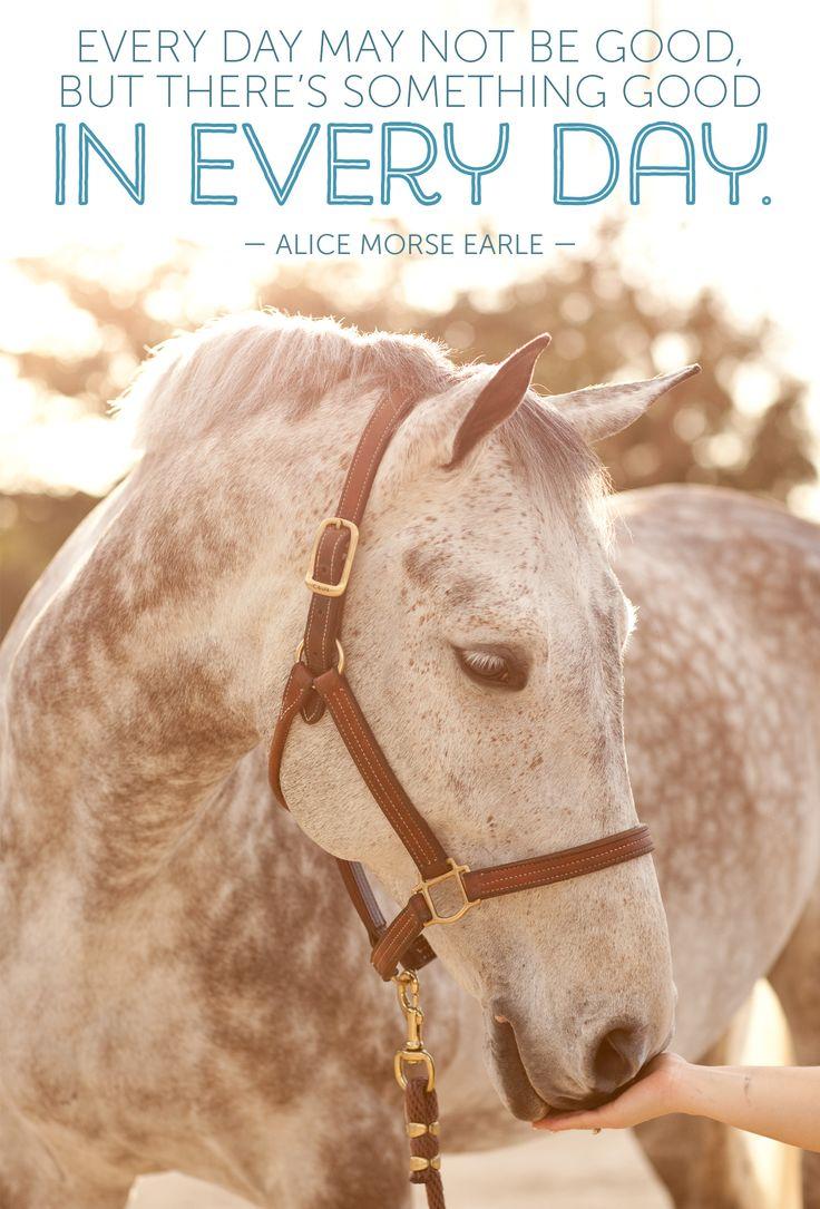 Pics photos quote i wrote for my horse com account s equestrian - Equine Quotesequestrian Quoteshorse Quoteshorse