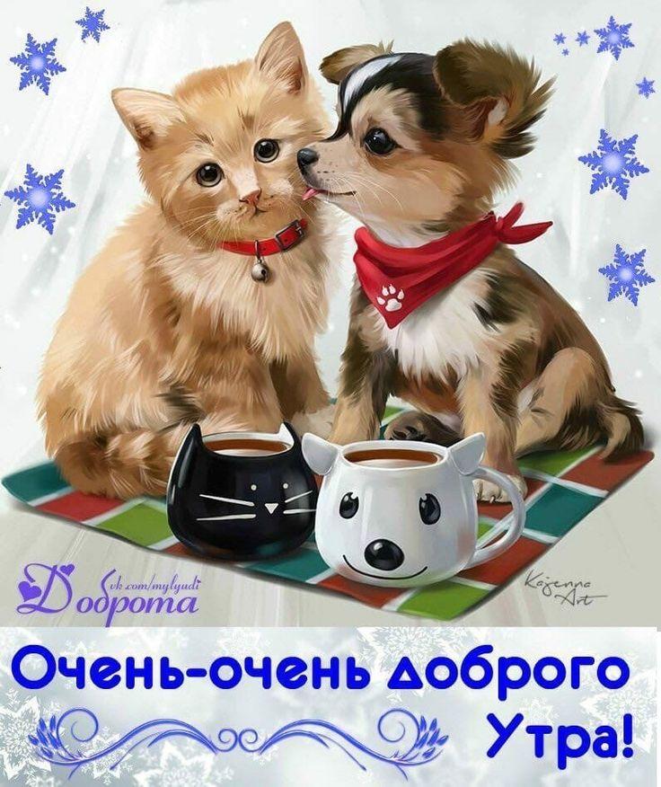 Гифки собачки и кошечки желают доброго утра
