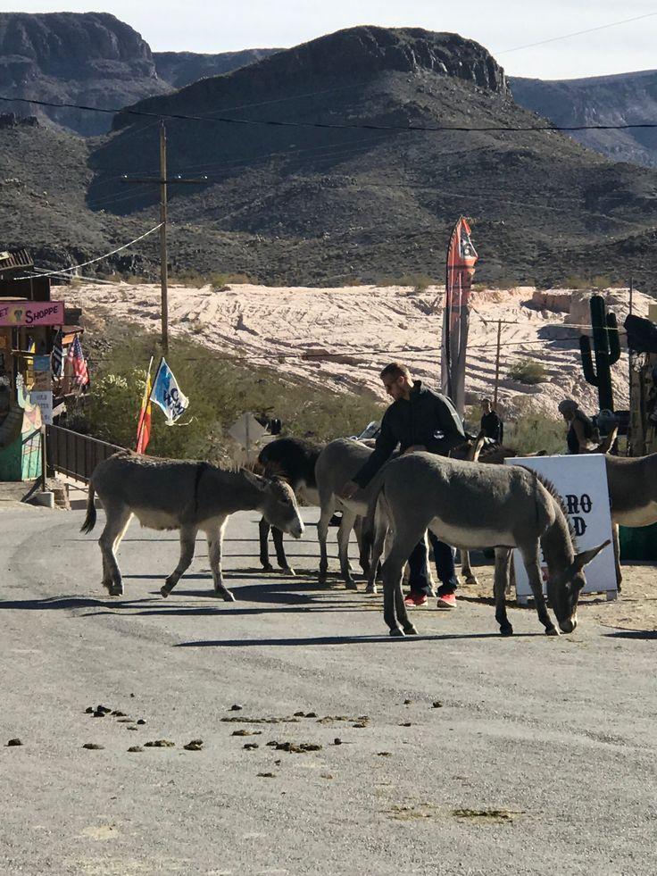 Donkeys of oatman az bullhead city arizona river float