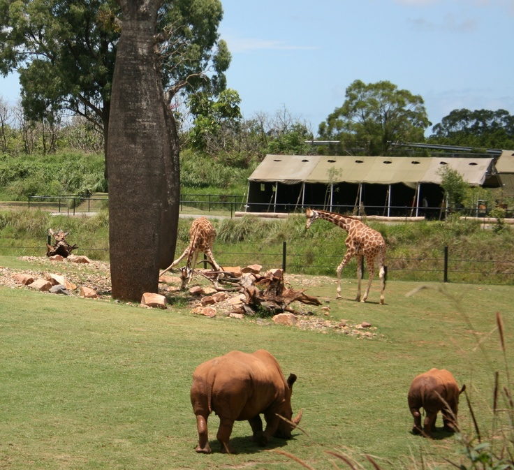 The Africa experience at Australia Zoo