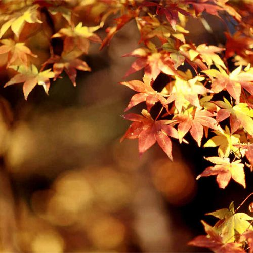 El equinoccio de otoño llega al aula
