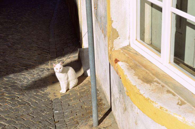 Cat in Portugal