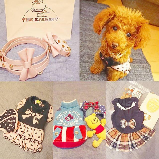 * 小さい頃からの夢を X'masに叶えてくれました♡  #トイプードル#4ヶ月#子犬 #飼い主初心者#勉強中#🔰 #ペット#愛犬#犬好き#🐩 #クリスマスプレゼント#🎄 #かわいい#溺愛#ふわもこ #お洋服#おもちゃ#首輪 #リード#ゲージ#ペット用品 #買い出し#自由が丘#お台場 #新しい家族#ありがとう #サンタクロースがきた#🎅#🎁