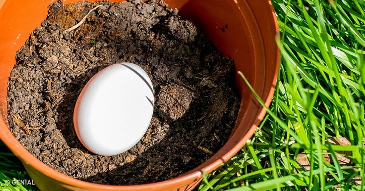 El jardín o un patio privado es un lugar especial, ahí puedes tanto trabajar como descansar, estando a gusto. Si tienes tu propio rincón de la naturaleza y te gusta crear algo nuevo con tus propias manos, estas ideas que Genial.guru reunió, te parecerán interesantes.