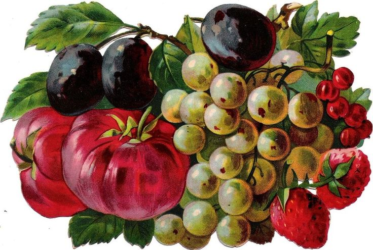 Oblaten Glanzbild scrap die cut chromo Obst 17,5 cm fruit Frucht berries Trauben