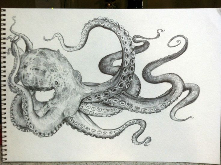Octopus drawing octopus sketch sketches and tattoo for Octopus drawing easy