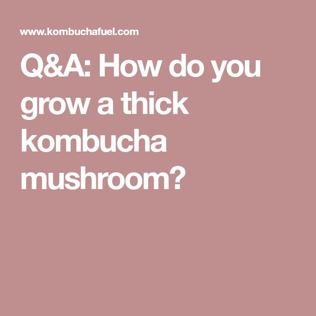 Q&A: How do you grow a thick kombucha mushroom?