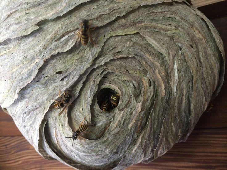 Derby Wasp Nest Removal And Control Service   Wasp Nest In Garden Sheds,  Childrenu0027s Play