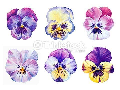 watercolor pansies - Pesquisa Google                                                                                                                                                                                 More