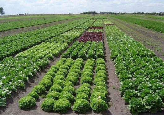 A largo plazo (diez años), un grupo importante de países (ente ellos Chile, Colombia, Guyana, Perú y República Dominicana) ha mostrado crecimientos sostenidos del volumen de la producción y de los ingresos agrícolas reales. En términos generales, se