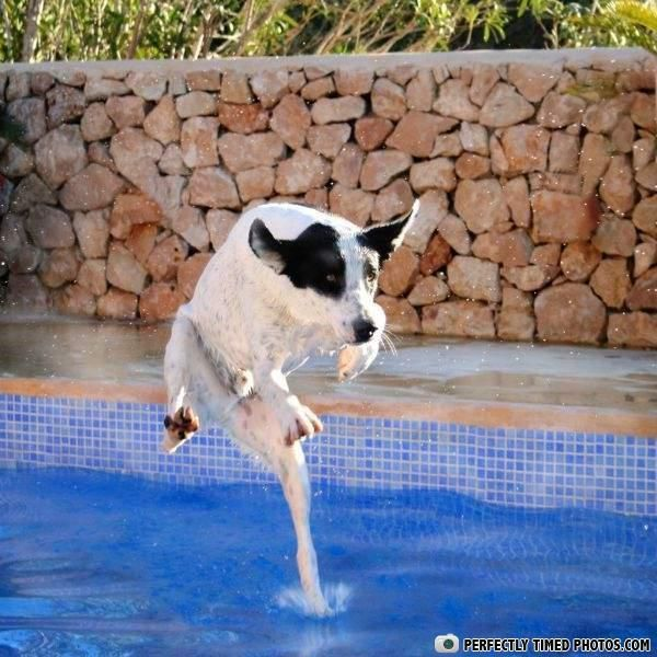 Best Perfectly Timed Photos Images On Pinterest Food Funny - Photographer proves dogs can fly with funny perfectly timed photos
