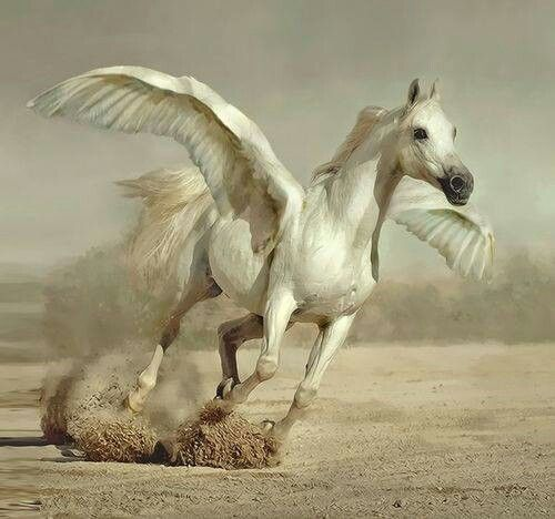 A REAL FLYING PEGASUS
