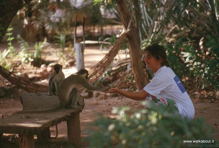 Monkey feedings