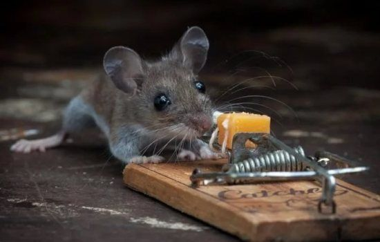К чему снится мышь маленькая или большая, много маленьких мышей? Основные толкования -  к чему снятся маленькие мыши - http://vipmodnica.ru/k-chemu-snitsya-mysh-malenkaya-ili-bolshaya-mnogo-malenkih-myshej-osnovnye-tolkovaniya-k-chemu-snyatsya-malenkie-myshi/
