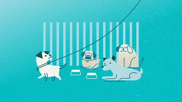 DogVacay on Motion Graphics Served