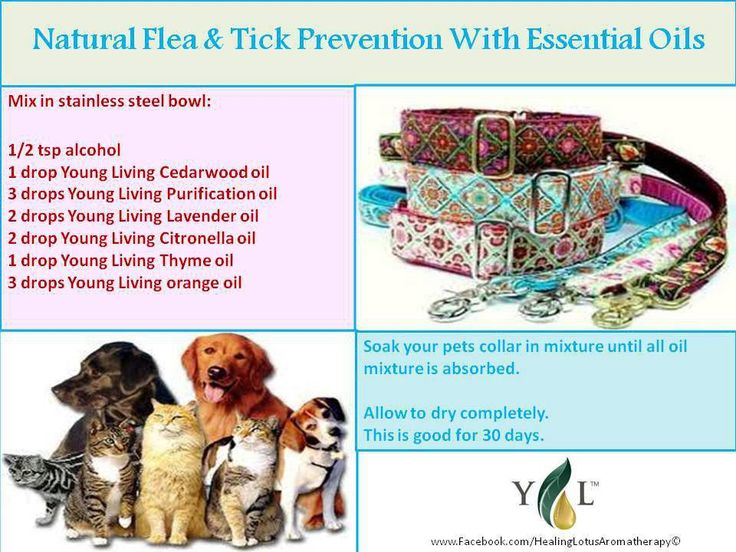 Natural Flea Spray For Dogs Using Essential Oils