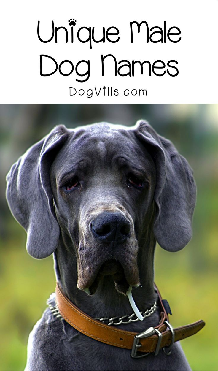 Looking for truly unique male dog names? I bet no one at the dog park has these 7 spectacular monikers! Check them out!