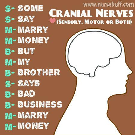 cranial+nerves+nursing+acronym