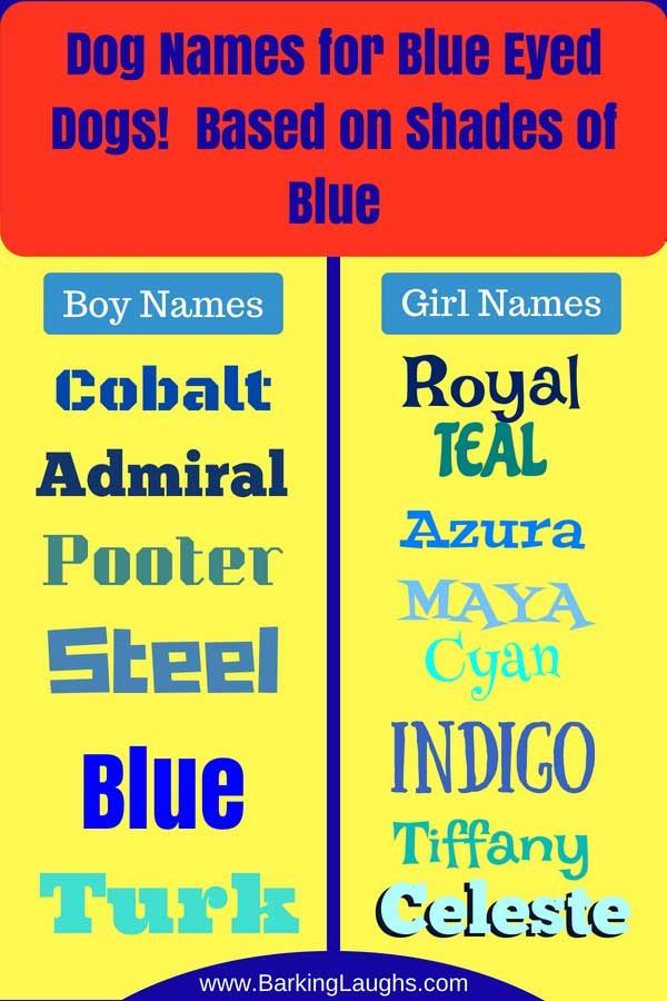 Over 90 Of The Most Hypnotic Blue Eyed Dog Names Dog Names Blue Eyed Dog Names Blue Eyed Dog