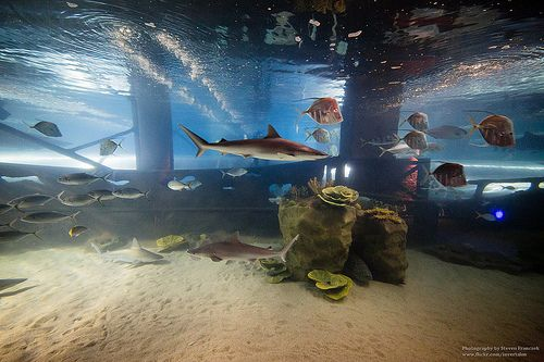 Check out this great shot at the greater cleveland Cleveland ohio aquarium