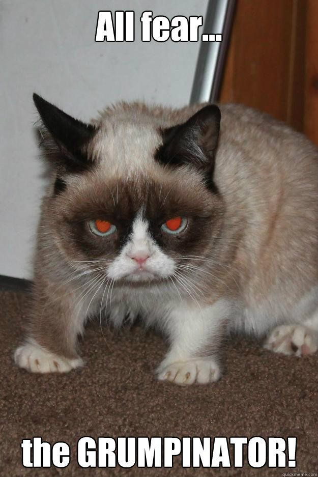 Hahahahah, Grumpy Cat would make a great sidekick to Arnold Schwarzenegger's Terminator...