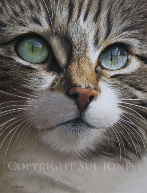 **Sue Jones (pastel on pastel card)