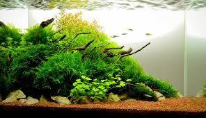 Dutch style aquarium