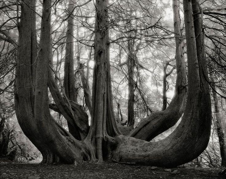 Gli alberi raccontano