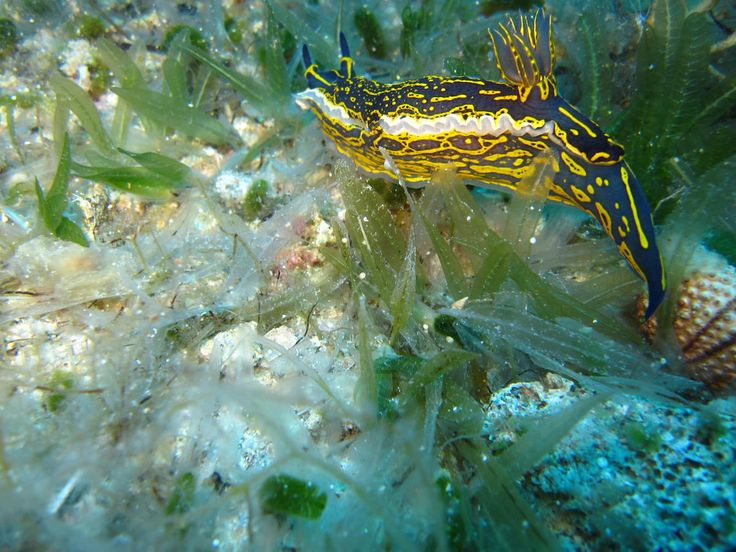 Diving in Chios Island - Greece