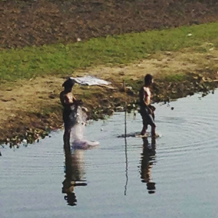 Some fishermen prefer wading waist-deep in the muddy water.  Taungthaman Lake.  #InSearchOf #ॐ  December 2014  U Bein #Bridge Taung Tha Man #Lake Amarapura Township #Myanmar #Trip # #AroundTheWorld  #Twitter handle PeterRanger #InstaTravel #NoFilter #SpirituallyP Exploring the techniques used to get closer to #  #Namaste #