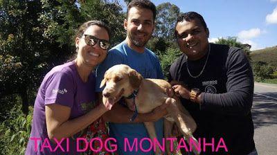 TAXI DOG MONTANHA TRANSPORTE DE ANIMAIS NO RIO DE JANEIRO: De CAXAMBU-MG para IPANEMA-RJ