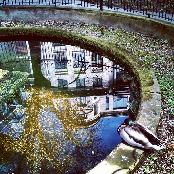 28 best images about city of london hidden secrets on for Koi pond quezon city