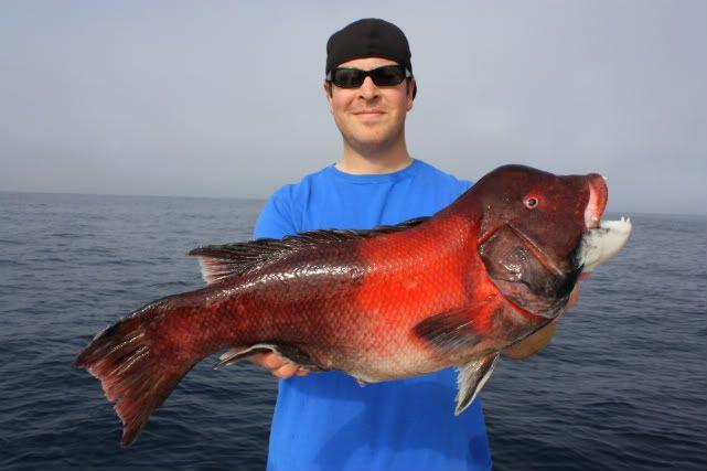 West coast sheepshead fish them though personally i for P o fish