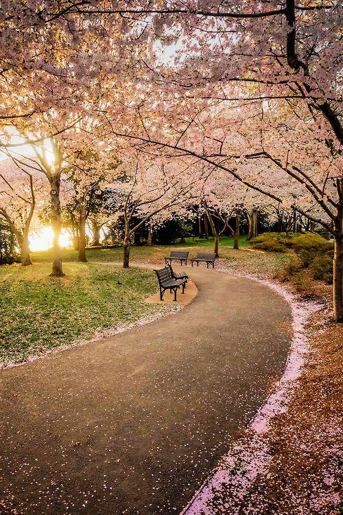 Cuenca Tidal (Tidal Basin).  Forma parte del parque West Potomac, situada entre los monumentos a Jefferson, Martin Luther King y Roosevelt - Washington DC, USA.