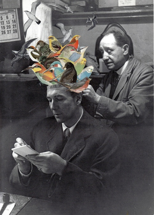 Mixed Media / Digital Art / Collage / Vintage photography / birds  - unknown artist.  b and w - contrast