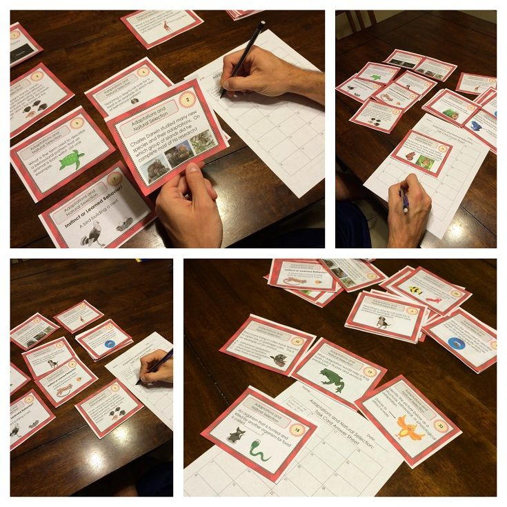 FREE Adaptations Task Card Set!!!  This Adaptations and Natural Selection Task Card set contains 32 different cards. Challenge your students to learn the basics of Adaptations. These cards are great for review, rotations, partner work, or independent study.