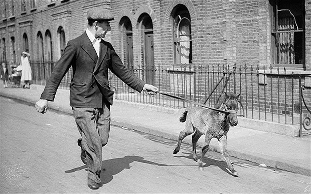 MINI HORSE Pet Foal, May 21, 1936 Mr Ogles of Poplar, east London, exercises his nine-week-old pet foal called Ogles.